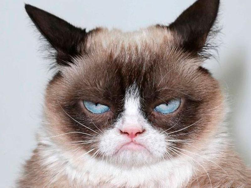Gato con expresión de cabreo
